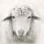 Profile picture of Sheepalore